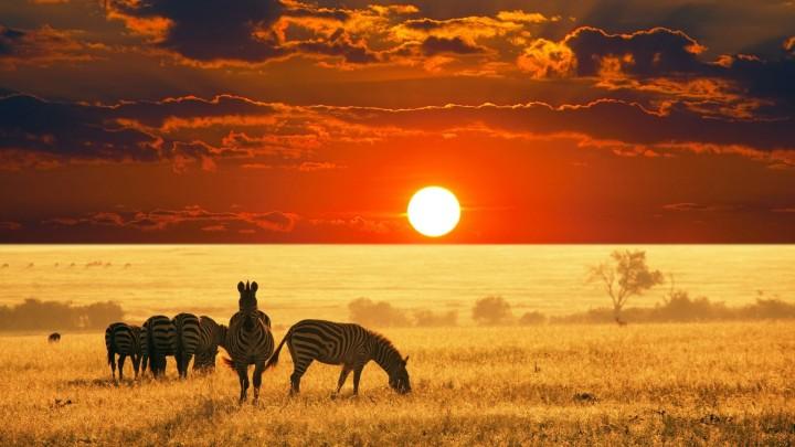 african-safari-sunset
